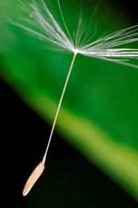 Efectul de bumerang al legii antifumat